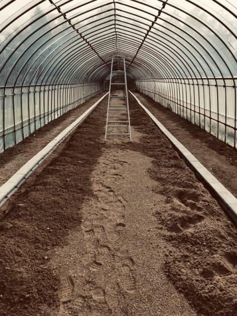 イチゴ苗圃場
